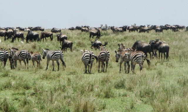 S = Serengeti