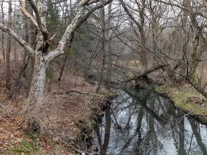 birkdale-creek3