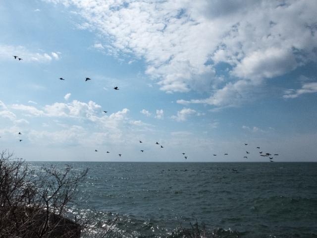 Humber Bay4