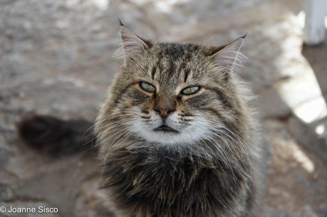 Greece - cats2