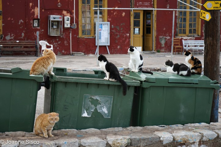 Greece - cats3