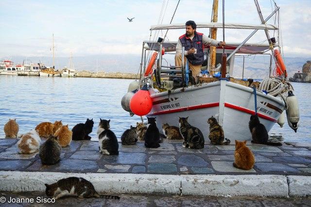 Greece - cats5