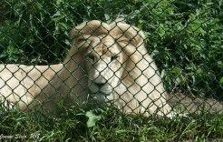 At Jungle Cat World ...