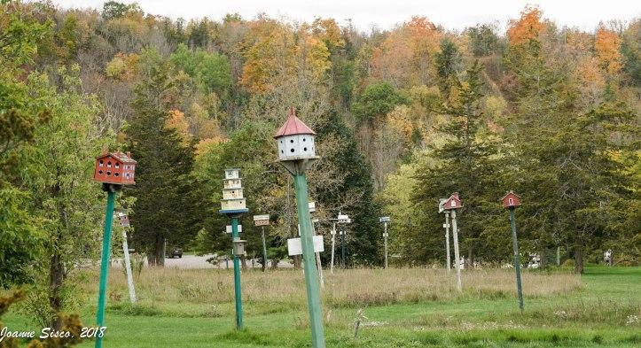Birdhouse City 13